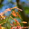 秋を先取り