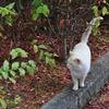 嵐山の看板猫??