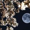 お月さんと遊ぶ