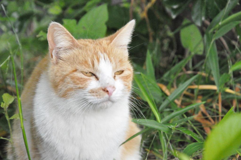 猫「解せぬ……」