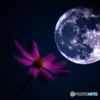 Cosmos Moon