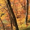 蔦温泉の紅葉8