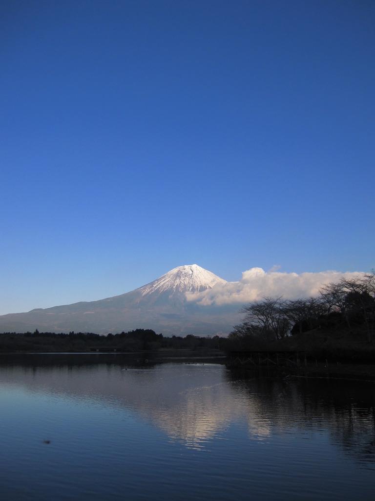 富士山 田貫湖より