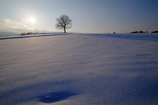 雪原に立つ