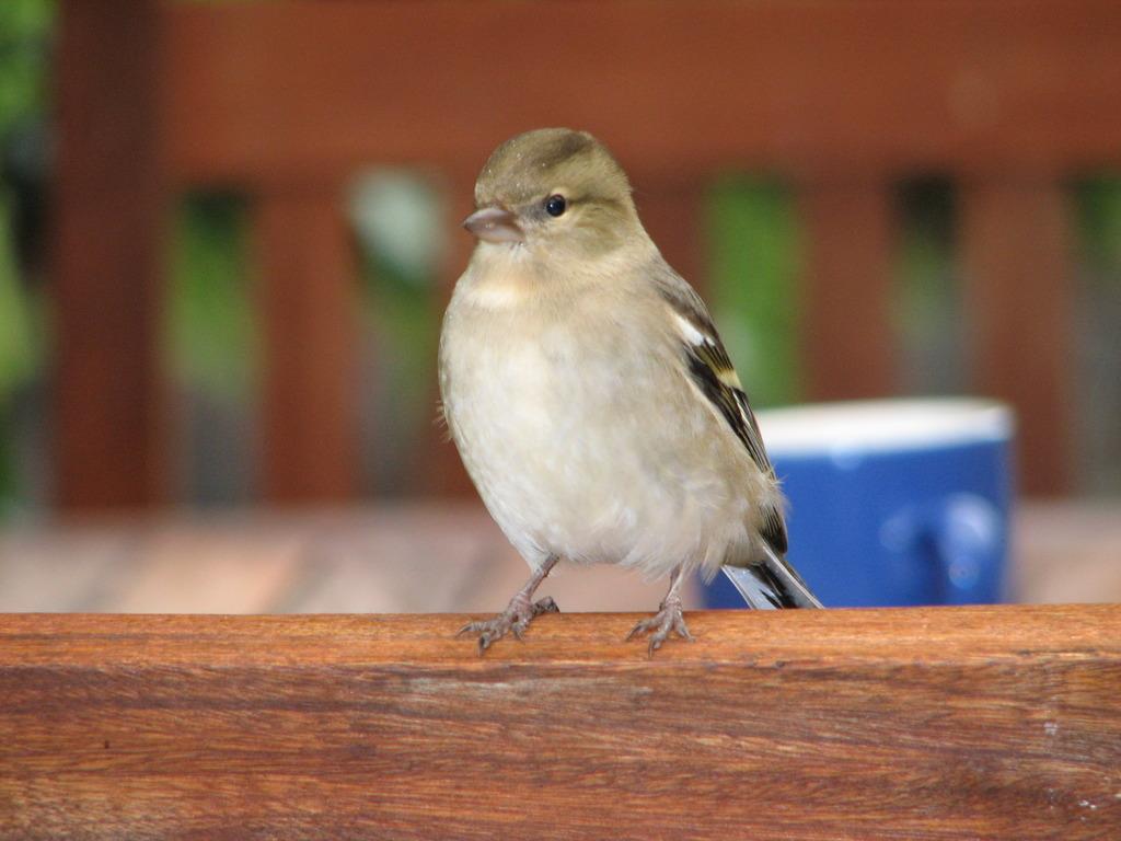 なんて鳥かな?