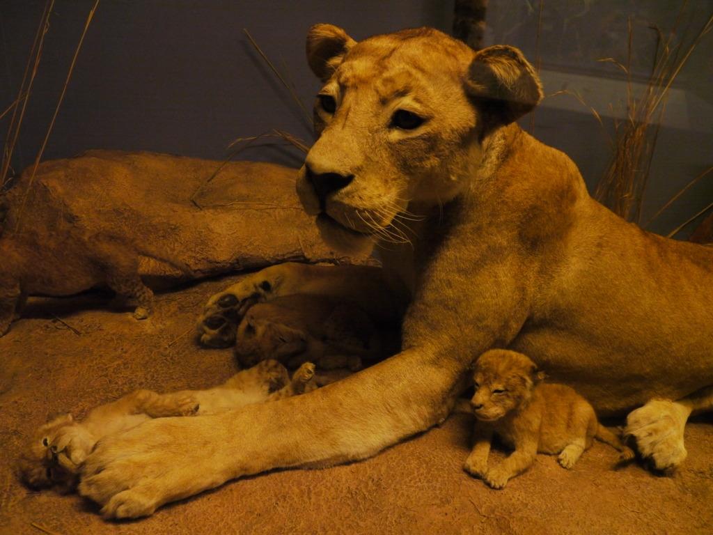 ライオンと子供たち