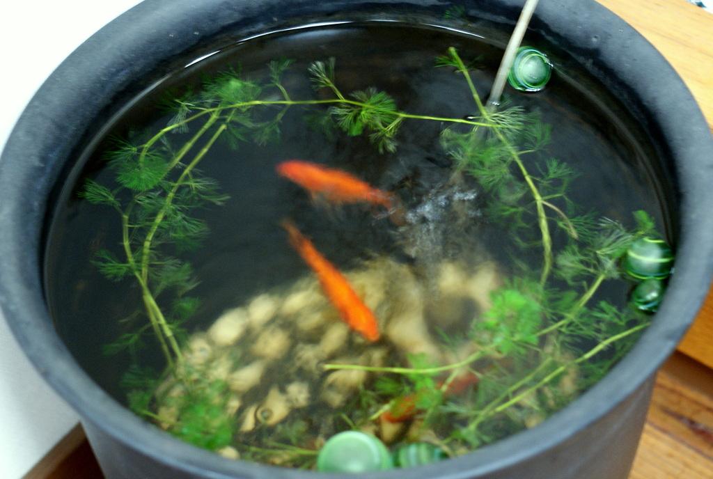 京風な金魚