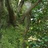 SONY DSLR-A300で撮影した植物(苔)の写真(画像)