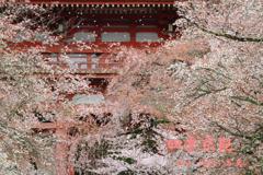 四季京艶 春 十六