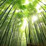 四季京艶 新緑を歩く