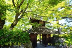 四季京艶 新緑の社寺を  六