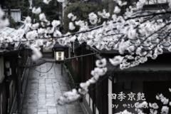 四季京艶 春 十三