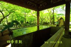 四季京艶 薫緑の候 三