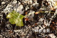 "四季京艶 ""秋色探し 二"""