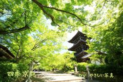 四季京艶 新緑の社寺を 四