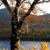須川湖紅葉2