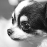 Family dog Poco