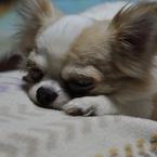 NIKON NIKON D700で撮影した動物(ねむーっ)の写真(画像)