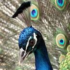 CANON Canon EOS 7Dで撮影した動物(優美3)の写真(画像)