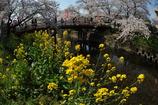 春の協演 横