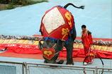 象の逆立ち