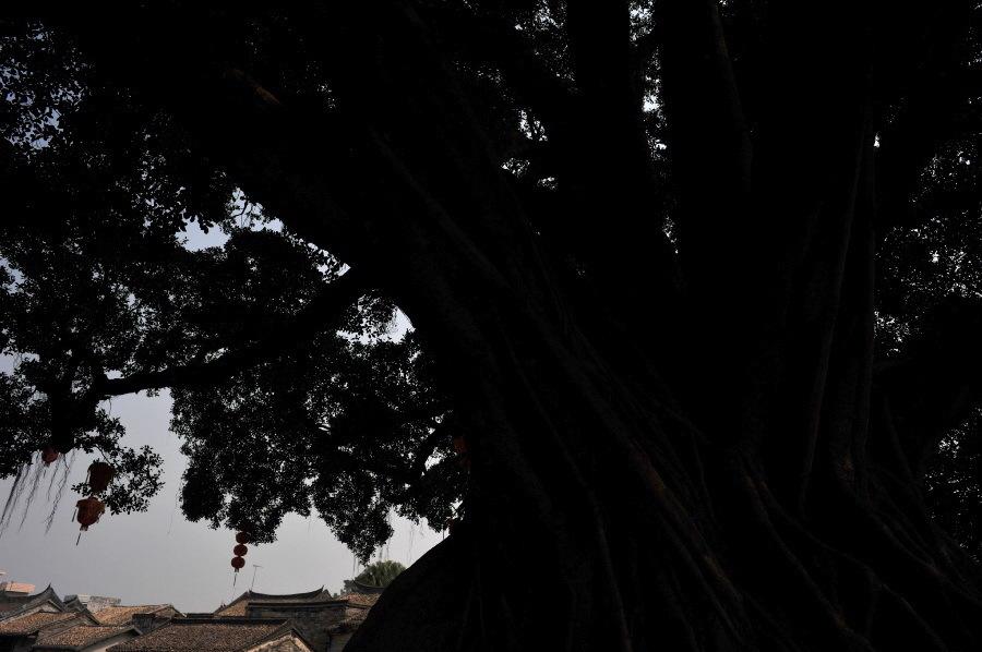 廃墟の中の大木