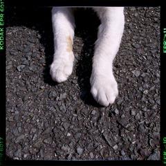 猫の足取り