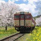 NIKON NIKON D700で撮影した(春爛漫)の写真(画像)