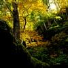 秋と森と静寂と