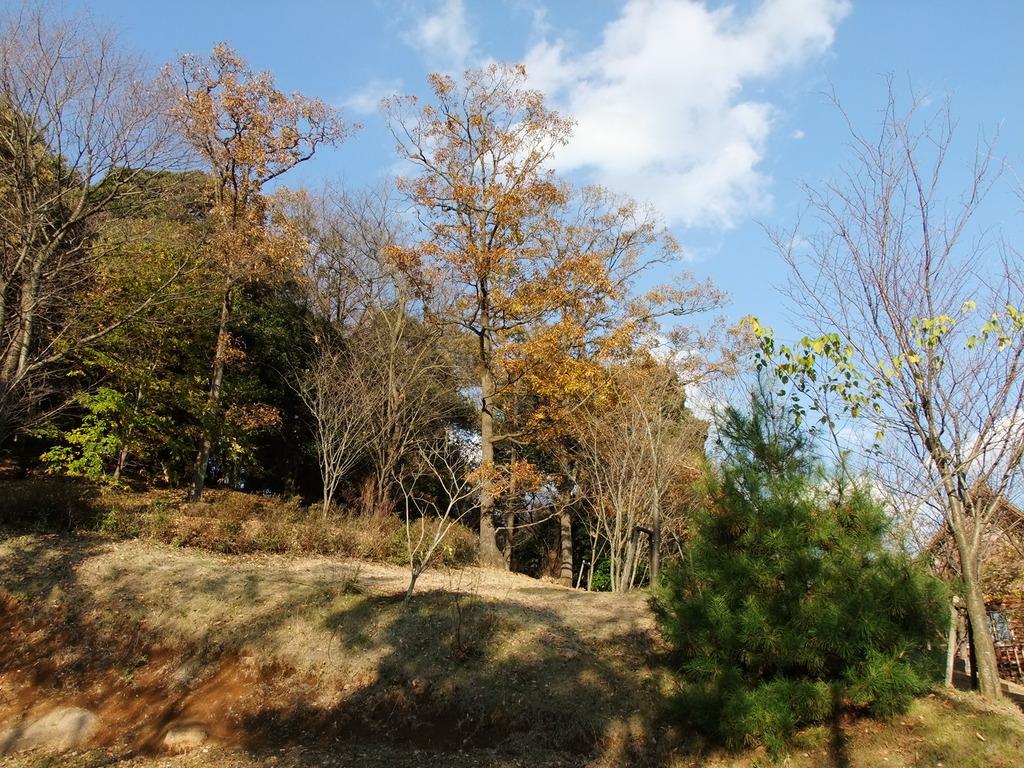 茨城~三ツ石森林公園より ~