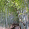 嵐山 竹林(手前)