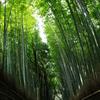嵐山 竹林(奥)