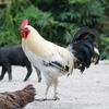 雲南省の農家