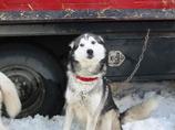 SHY DOG@ALASKA