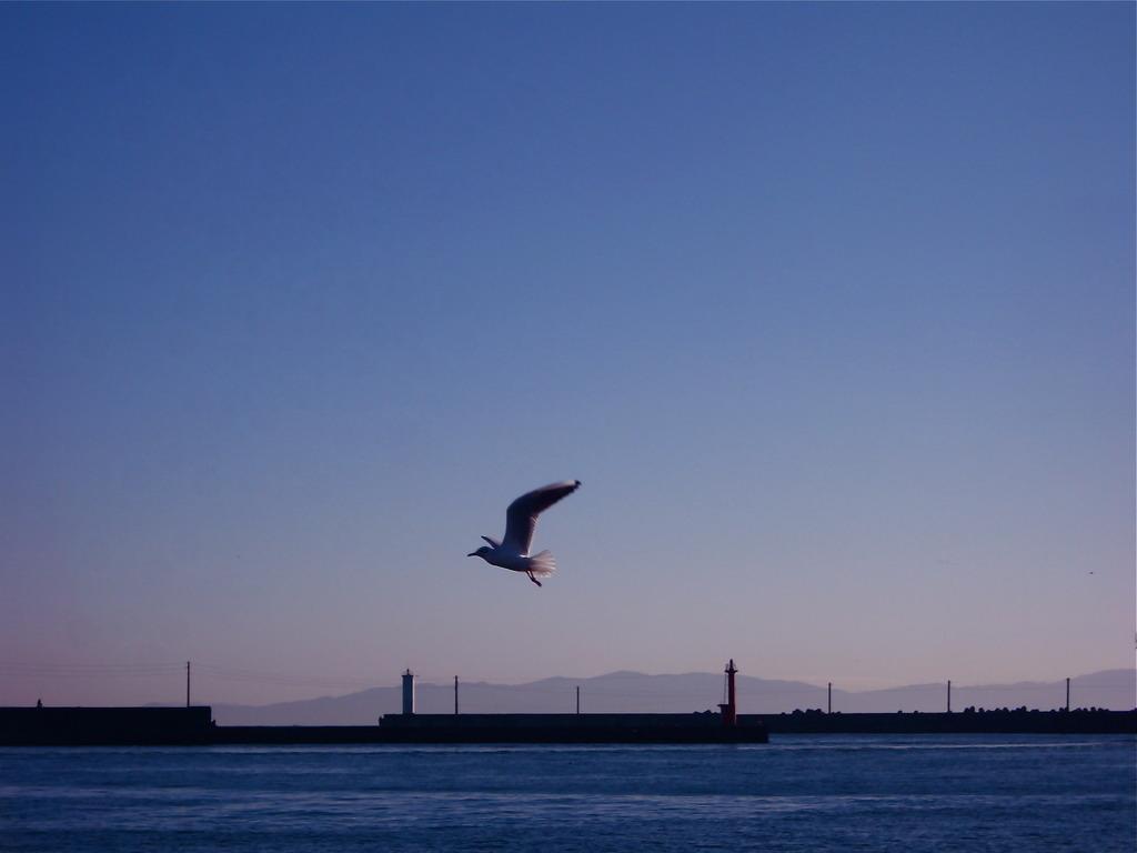 BIRD@yaizu port shizuoka