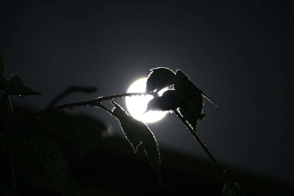 月と光と影