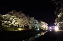 うぐい川の夜桜