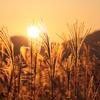 曽爾の夕日