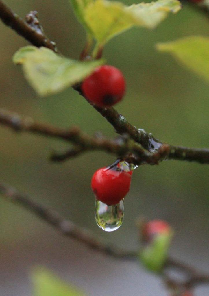 雨の日の雫