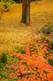 秋を訪ねて