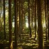 ナルウェーの森