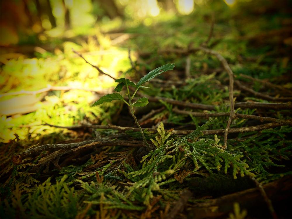 森の中の葉っぱ