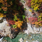 PENTAX PENTAX K-7で撮影した( Red leaves of autumn)の写真(画像)
