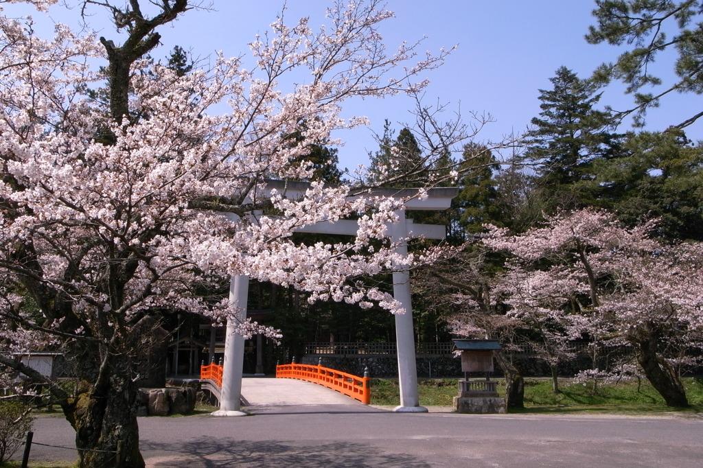 熊野大社のさくら