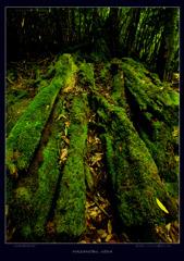 屋久島、森の中の苔