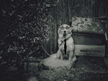 犬の人生 その2 こんな人いますよね。(笑)
