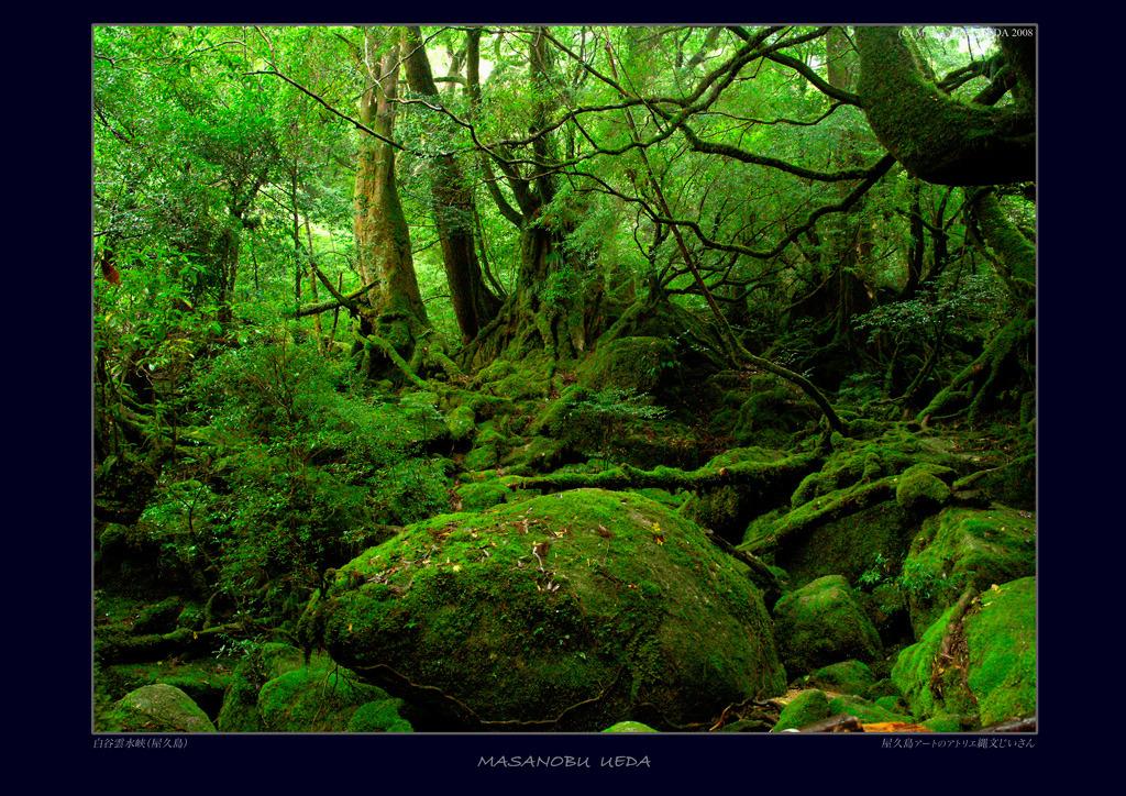屋久島『もののけ姫の森』と言われていたところ