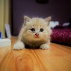 CANON Canon EOS 5D Mark IIで撮影した動物(子猫)の写真(画像)
