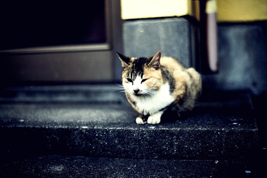 静止する猫