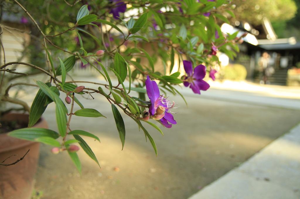 境内に割く花